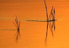Παντα ρει~Everything flows~Alles fließt (maria xenou) Tags: sunsetlight greece reflections spiegelung sonnenlicht sunlight griechenland wasser water plants nature natur ελλαδα νερο φυτα αντανακλαση φωσηλιου moments motion momente στιγμεσ zeit time χρονοσ