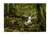 Horseshoe Falls - Tasmania (dominicscottphotography.com) Tags: australia tasmania horseshoe falls waterfall waterfalls glade forest bush horseshoefalls dominicscott a7rmii ilce7rm2 gmaster sel1635gm leefilters longexposure manfrotto
