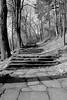 Escaliers en déclin (zuhmha) Tags: bulgarie bulgaria hiver winter shipka escalier stair campagne campain bois wood tree arbre banc forêt parc monochrome