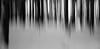 winter forest (Toni_V) Tags: m2406163 rangefinder digitalrangefinder messsucher leica leicam mp typ240 type240 35lux 35mmf14asph 35mmf14asphfle summiluxm winter snow schnee hiking wanderung sihlwaldalbishornbuchenegguetlibergzurich motion blur longexposure tree trees wald bw monochrome blackwhite schwarzweiss albis kantonzürich switzerland schweiz suisse svizzera svizra europe ©toniv abstract 2017 171229