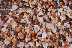 season of the soul (ambcroft) Tags: leaf foglie woods bosco autumn autunno seasonofthesoul sicily sicilia italy italia parcodellemadonie travel viaggio travelling viaggiare holiday vacanza memories ricordi nikon nikond3000