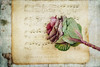 Ornamental Cabbage (Janet_Broughton) Tags: lensbaby velvet85 cabbage ornamental music old textured