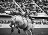 WacoRodeoDec2017 33 (cdw21) Tags: blackandwhite cowboy texas waco rodeo sport skill horse