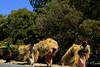 CAMINO AL SUR (RLuna (Charo de la Torre)) Tags: etiopia abisinia ethiopie abesha farangi africa nilo waterfall cascada addisabeba bahardar gondar axum lalibela ortodoxo oromo amara konso hammer mursi ari karo banna chamo chencha dorze turmi wareta dimeka arbaminch weyto omo jinka travel trip vacaciones canon photo landscape harar khat market rluna rluna1982 ethiopianairlines ramadan muslim musulman ecologia medioambiente naturaleza nature cultura instagram flickr spotlight instagramapp photography ethiopia afrika tribal tribes people faces ethnic ethology tradition culture me camera natural igers igersspain igersmadrid
