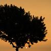 Golden Lima (Geraint Rowland Photography) Tags: golden goldenhour sun sunshine sunset settingsun peruviansunsets limagris sunsetsofperu maleconinmiraflores lima peru geraintrowlandphotography thegoldenhour lightinphotography instagramphotographergeraintrowland squareformat squaresunset tree nature light ocean wwwgeraintrowlandcouk visitperu visitlima visitmiraflorres photographytoursinlima canon 50mm