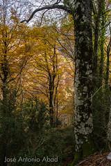 Valle de Ansó, Huesca (Jose Antonio Abad) Tags: joséantonioabad paisaje aragón valledeansó naturaleza pública españa huesca jacetania lajacetania es