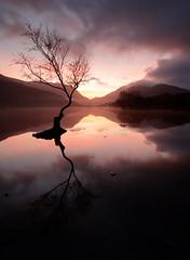 Llyn Padarn (Andy Davis Photography) Tags: llynpadarn snowdon snowdonia llanberis northwales lonelytree sunrise winter cold reflections still canon