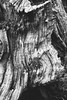 (rafalweb (moved)) Tags: tree stump texture black white blackandwhite monohrome filmeffect filmemulation feelslikefilm haldclut rawtherapee gimp canon eos 7d ef 50mm f14