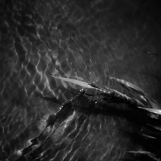 River Flow 045