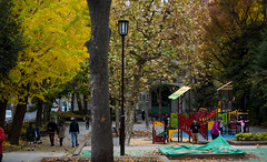 From the park, Fukagawa Library (深川図書館) (christinayan01 (busy)) Tags: fukagawa library fall autumn ginkgo leaf leaves architecture tokyo japan park