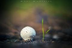 oY (www.studio360fotografia.es) Tags: setas pinardelrey olympus em10 zuiko 45mm 18 mushroom bokeh desenfoque colores colors fantasy fantasia