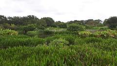 20170628 (048) Wakodahatchee Wetlands Delray Beach FL USA (FRABJOUS DAZE - PHOTO BLOG) Tags: wakodahatcheewetlands wakodahatchee wetlands palmbeachcounty pbc fl fla florida usa yhdysvallat nature wildlife park preserve refuge luonto luonnonpuisto luontokuvaus naturephotography