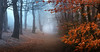 Cold Days, Warm Hearts (Adam West Photography) Tags: adamwest beech cold copper dawsholm days fog forest glasgow hearts landscape leaves mist nature park scotland trees uk warm winter woodland