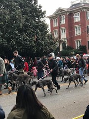 """Scottish Christmas Walk in Old Town • <a style=""""font-size:0.8em;"""" href=""""http://www.flickr.com/photos/117301827@N08/27215718319/"""" target=""""_blank"""">View on Flickr</a>"""