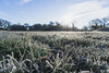 Chillblades (NVOXVII) Tags: grass frost nature icy winter december field landscape bluesky chilly canon eos dof depthoffield blades brrrrr