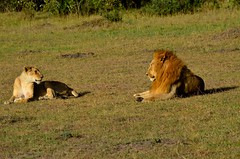 DDR_3619 (Santiago Sanz Romero) Tags: kenya wildlife animales ngc