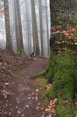 La foresta di Camaldoli (LLauraNLS) Tags: appennino landscape paesaggi mountains montagne trekking trekkingdelleforestesacre hiking foresta foliage forest forestecasentinesi camaldoli nature italia italy toscana tuscany dogs dog cani dogtrekking wood path sentierodelleforestesacre