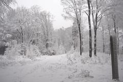 Winter Wonderland (Kitty Terwolbeck) Tags: netherlands veluwe veluwezoom nationalpark nationaalpark sneeuw snow winter woods forest trees hiking wandeltocht wandeling wandelen walking cold snowy landscape nature
