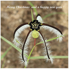 Merry Christmas and a happy new year 2018 ! (Raiwen) Tags: merrychristmasandahappynewyear2018