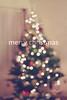 52 Week Project - Week Fifty One (MarianneLoMonaco) Tags: bokeh tree twinkle lights christmas blur oof text haze mariannelomonaco
