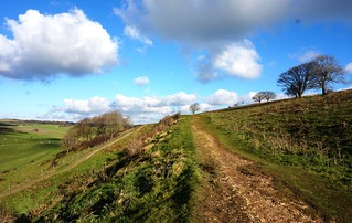 Northern ramparts of Cissbury Ring 1
