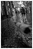 C'était un temps à ne pas mettre un chien dehors (Jean-Marie Lison) Tags: x100t bruxelles ruedesbouchers chien pluie pavés noiretblanc nb monochrome