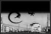 I'm hiding, really hiding... (Caro Rolando) Tags: iguana animales animal paisaje paisajeurbano vista ventana patas cola blancoynegro blackandwhite monocromo monocromatico argentina buenosaires