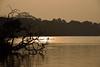 The sculler and the cormorants (sanat_das) Tags: kolkata rabindrasarobar lake water silhouette thescullerandthecormorants d800 28300mm