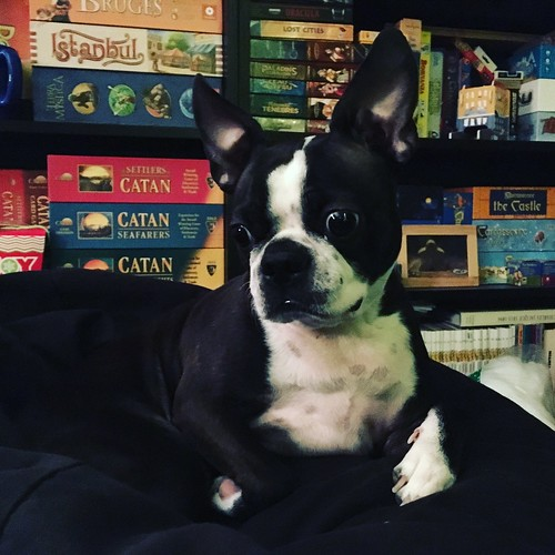 boston terrier hub
