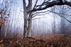 We Two (downstreamer) Tags: claycliffs leelanau conservancy fog maple path leland michigan unitedstates us