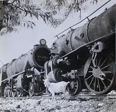 Israel Railways - ISR 2-8-0 & 4-6-0 steam locomotives in Haifa in the 1950s (HISTORICAL RAILWAY IMAGES) Tags: train רכבת ישראל קטר isr steam locomotive israel railways haifa