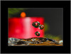 3. Advent (alfred.hausberger) Tags: kerze advent tropfen wasser