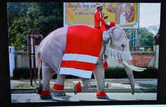 santa travels on a white elephant in thailand (the foreign photographer - ฝรั่งถ่) Tags: white elephant christmas colors red santa tv internet photo thailand monitor nikon d3200 2017