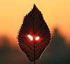 Ready? (Robyn Hooz) Tags: foglie occhi eyes nightmare incubo xmas christmas movie timburton creativity altrimentisaichenoia fantasy