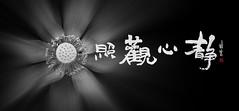 lkh29 (kin hoong2013) Tags: black nikon nikond500 d500 lanscape lotus blackandwhite 黑白 荷花 荷花池 书法 光 photoshop lightroom adobe lake 花藏世界 malaysia 花 flower light lights calligraphy