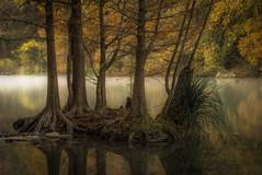 Aglow (keith_shuley) Tags: mist misty mistymorning dawn austin texas ladybirdlake stream creek river texashillcountry cypress cypressgrove