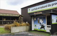 Frais & Fair (chando*) Tags: belgique belgium brabantwallon cows farm ferme lait milk vaches