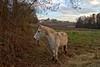 Friendly encounter (Chemose) Tags: ami friend cheval horse champ field nature rencontre encounter décembre december chaintré bourgogne burgundy canon eos 7d automne autumn