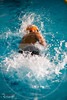 XXC_4030 (RawerPhotos) Tags: castre championnatdefrance sauvetage shortcourse eauplate pool championships surf life saving