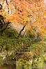 Higashiyama Kyoto (takashi_matsumura) Tags: higashiyama higashiyamaku kyoto japan ngc nikon d5300 autumn fall sigma 1750mm f28 ex dc os hsm