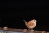 _DSC5225 (mattmobbs) Tags: birding birdwatcher bird birds feathers contrast animals wildlife nature black light winter outdoors pretty wren d610
