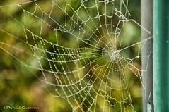 Bejeweled Web (Michael Guttman) Tags: spiderweb web waterdroplets closeup macro bokeh
