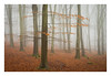 Friston Forest - December 21st (Edd Allen) Tags: forest trees tree treescape mist nikond610 nikon d610 70200mm landscape country countryside atmosphere atmospheric sunrise uk eastsussex woods woodland serene bucolic melancholy foliage leaves spring summer silverbirch fristonforest fog sunlight frost winter