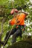 20170729-itcc--112651jpg_36129443152_o (ITCCAdmin) Tags: arboretum isa arboriculture arborist competition treeclimbing