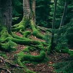 Moody Green Landscapes thumbnail