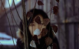 Behind the Leaves