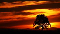Recomeçar (Eduardo Amorim) Tags: pôrdosol poente entardecer poniente atardecer sunset tramonto sonnenuntergang coucherdesoleil crepúsculo anoitecer pelotas costadoce riograndedosul brésil brasil sudamérica südamerika suramérica américadosul southamerica amériquedusud americameridionale américadelsur americadelsud brazil eduardoamorim pampa campanha