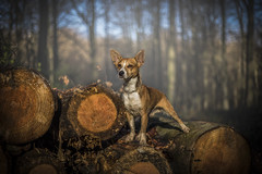 Whiskey in the woods (Paul`s dog photography) Tags: whiskey woods forest canon eos 5d mark iv ef50mm f18 stm
