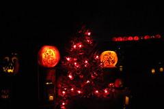 IMG_6467 (comtrag) Tags: jackolanterns rogerwilliamszoo rhodeisland halloween pumpkins pumpkincarving