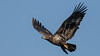 Tight Grip on That Meal (Ken Krach Photography) Tags: eagle